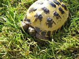 Tortoise/Lizard Specific Kits (calcium, seeds, bedding)